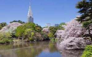 日本の花の名所に対する海外の反応