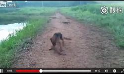 【動画】イッヌがデンキウナギを噛んだ結果wwwwwwwww