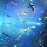 『空に浮かぶ大きな水族館が圧巻!壁から覗く目玉に体がゾクゾク』の画像