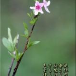 『四百年目の稲作』の画像