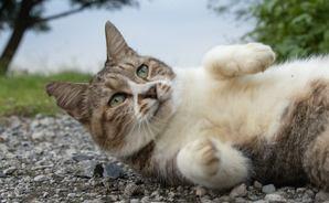 猫写真家・沖 昌之のブログ 野良ねこちゃんねる。