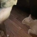 ネコは「今だ!」と思ったようだ。犬がソファの上を気にしていた → 猫はこうなる…