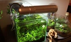 最近ホムセンでも水草レイアウト水槽の丸ごと販売やるとこ増えたな