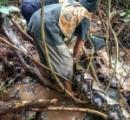 【インドネシア】ウナギ捕りに出掛けた村人ら、8メートルのヘビ捕獲 動物園に引き取りを求めるも収容能力を超えると断られる