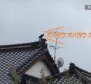 「おはよう」とあいさつされ、屋根見たら…