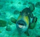 海に潜む恐怖…………! 世界最強の海洋生物ランキングBEST10がヤバすぎるwww