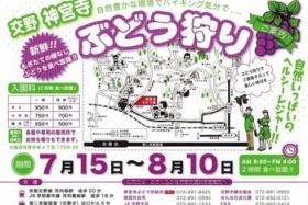 大阪市内から車で30分!神宮寺のぶどう狩り。今が旬です! ~2時間950円!!8/10(土)迄の期間限定です~