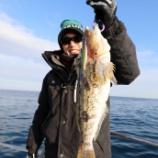 『1月20日 釣行 スロージギング サバ大爆釣!!』の画像