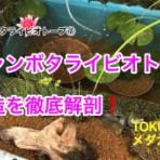 Tokuzeのメダカ飼育日記(屋外でメダカを飼おう!)