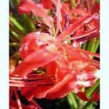 『花ひらく』の画像
