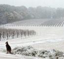 【画像】オーストラリアで100年ぶりに雪が観測される