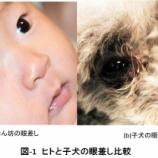 『九州高気圧環境医学会における特別講演を終えて(8)』の画像