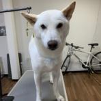 岡谷市のトリミングサロン Dog Design SALO