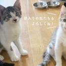 『猫全部乗せご飯』那須の長楽寺【動画】