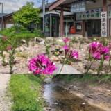 ●湯川(トラウトパーク軽井沢)のサムネイル