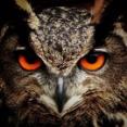 【閲覧注意】世界で最も危険で邪悪とされる『最強生物』ランキングBEST100!!!!