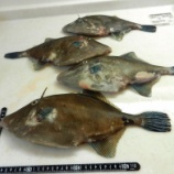 『国東の食環境(80)第5回国東お魚便』の画像