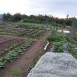 『貸し農園(市民農園)のブログ記事(2017年版)』の画像