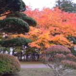 『4万坪超の風景式庭園「香雪園」見晴公園の紅葉』の画像