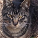 十条仲通り商店街 今日の猫 2016年2月25日のサムネイル