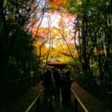 『大徳寺「高桐院」でまた来年』の画像