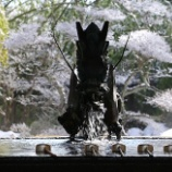『神社と犬猫』の画像
