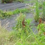 『防草シートを敷いても草は生える!?』の画像