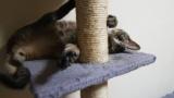 猫「おは…」ネボケー ワイ「起きたんか」