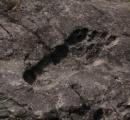 中国で巨人の足跡がみつかる(画像あり)