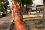 ソトバルとは!?私市駅前で昼飲みしてみた!〜交野でエビ串が外で食べられる唯一のお店!〜