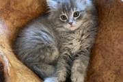 【米国】270万円のクローン猫が亡き猫と「眠る場所から性格まで同じ」と飼い主は歓喜