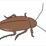 ゴキブリが住まない家って出来ないの?