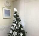 クリスマスツリーを買ったら、フクロウが隠れていた