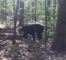 【(・(ェ)・)】頭が容器から抜けなくなった野生のクマを救出 米