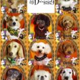 『2013/10/11のわんちゃん達』の画像