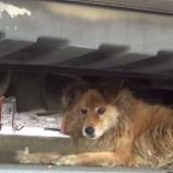『Googleストリートビューに助けられた犬』の画像