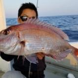 『10月 2日 釣果 スーパーライトジギング マダイにヒラメ』の画像