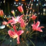 『花のある風景』の画像