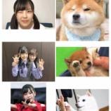 『【乃木坂46】可愛すぎるw こんなのあるのかwww いろんな表情の柴田柚菜と『子犬ちゃん』完全一致wwwwww』の画像