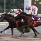 『【高知・黒潮菊花賞結果】トーセンジェイクが二冠馬ハルノインパクトをゴール寸前で差し切りV!』の画像