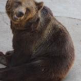『福岡大のワンゲル部のヒグマ襲撃事件って怖すぎだろ』の画像