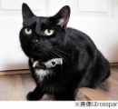 """猫スリンキー・マリンキが隣家窓叩き""""助け""""求める、飼い主が薬の影響で倒れピンチに"""