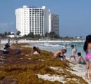 キンタナロー州の沿岸部にホンダワラ属の海藻が大量漂着し地元住民困惑