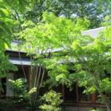 『【続・庭造り計画】常緑樹と落葉樹の植栽』の画像
