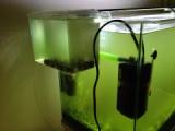 『濁った水槽に「マシジミ」を迎え入れる4(中間報告)』の画像