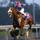 『【水沢・ビューチフルドリーマーC結果】川崎のアッキーが早め先頭から4馬身差つけ圧勝』の画像