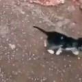 子猫たちがトコトコ歩いて行く。遠くに行っちゃダメよ → 犬のお母さんはこうします…