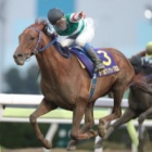 『【大井・フジノウェーブ記念】トロヴァオが抜け出し2馬身差快勝』の画像