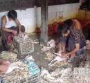 中国では病死したニワトリを焼いて販売してると判明(画像あり)