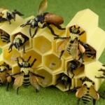 リアルな「ミツバチ」と積める「蜂の巣」がまんまフィギュアになってガチャに登場!
